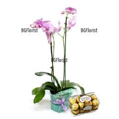 Поръчка и доставка на орхидея и бонбони Фереро
